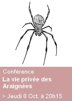Conférence Araignées