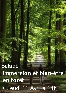 Immersion et Bien-Être en forêt
